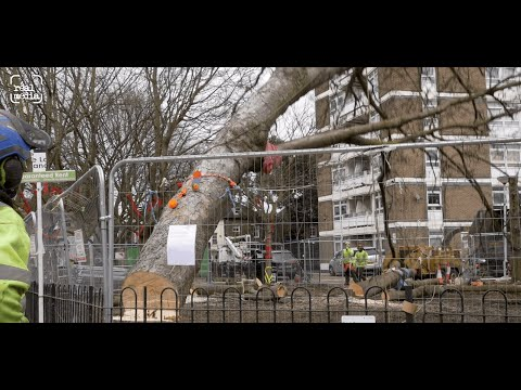 Final battle for trees at Dixon Clark Court in Highbury, north London.