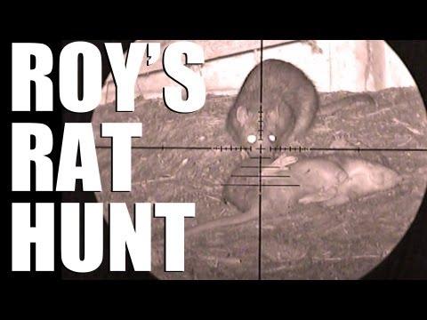 Fieldsports Britain – Roy's rat hunt