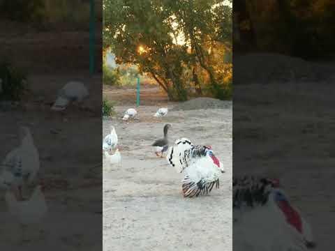 Video Of Sevier River RV Park, UT