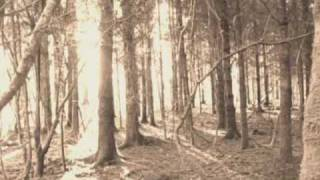 When I was in my Prime - A walk in the wood