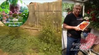 Посадка семян по Железову -  повторение посадки Божественной природы!