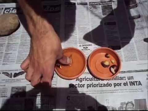 Los ungüentos baratos contra el hongo de las uñas