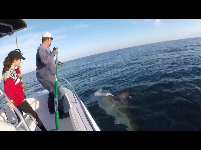 16ft Great white shark caught and released off Hilton Head, SC