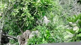 Ogop Batu Tulug.Kota Kinabatangan.Sabah