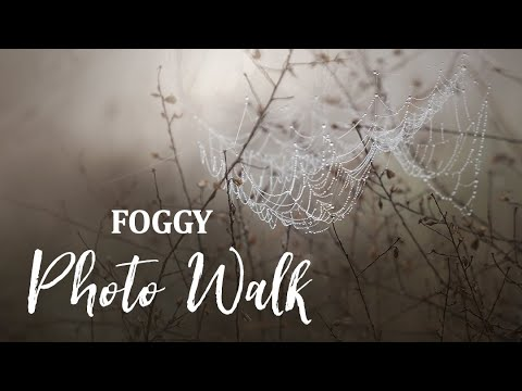 foggy nature photography beautiful conditions for macro photography by liesl huddleston