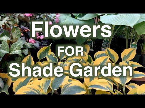 , title : 'Shade Garden Flowers. 25 Perennials Proven To Grow.