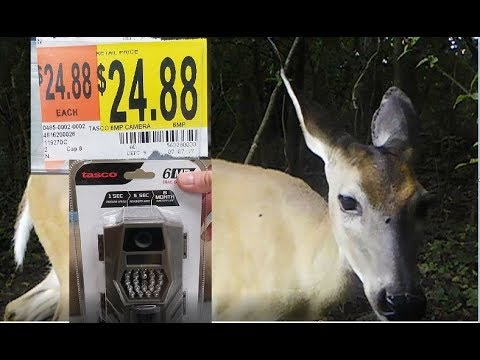 Best Budget Trail Camera - $25 - Setup with Video and Image Examples - Tasco Trail Camera