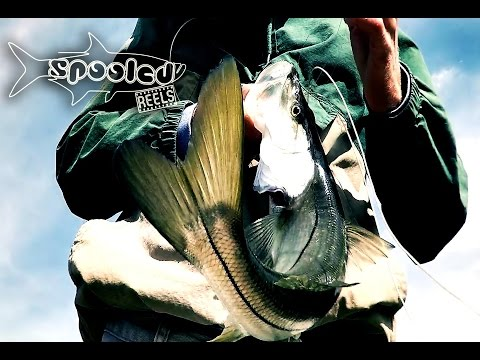 """Fly Fishing for Snook """"Short Sessions"""""""