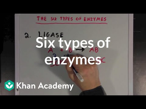Six types of enzymes (video) | Biomolecules | Khan Academy