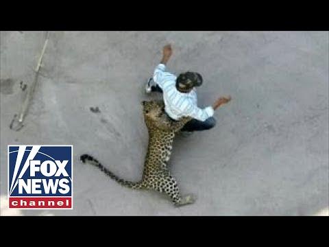 В индийском поселении леопард напал на людей