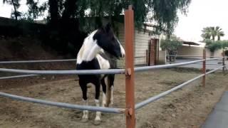Игры с лошадкой)