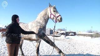 Жители Новосибирского района опасаются, что лошадей из конного клуба отправят на бойню
