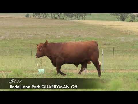 JINDELLISTON PARK QUARRYMAN Q5 (AI) (AMF) (MAF) (NHF) (OSF) NECQ5