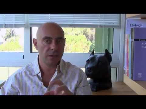 Curso Online Adiestramiento. Manejo del Collar y la Correa. www.canine-service.com