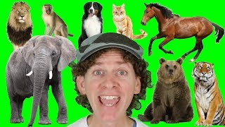 A to Z Alphabet Animals Chant with Matt | Learn Animals Names | Alphabet for Kids