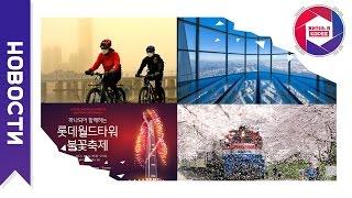 Открытие Lotte Tower, воздух Сеула, цветение сакуры, КНДР привлекает китайских туристов, и др.