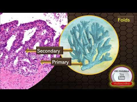 Acute prostatitis and potency
