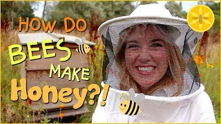 How Do Bees Make Honey?   Beekeeping With Maddie #13