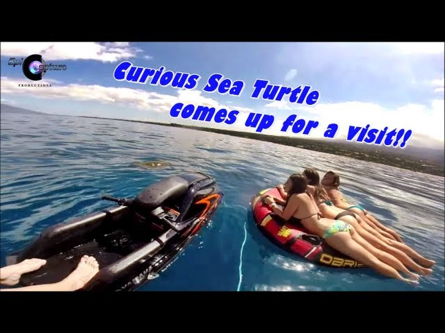 """Sea Turtle comes to say """"Hi"""" to girls floating on tube ~ A Honu Experience :)"""