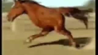 Retarded Running Horse 10 Hours