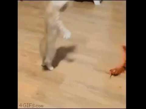 поскакушки котэ с гусеницей