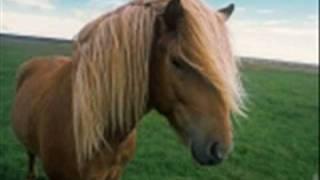 Jaromír Nohavica-Já viděl divoké koně