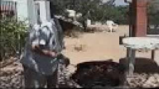 Video del alojamiento El Cuco