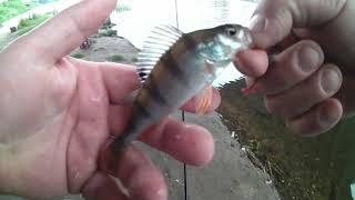 Отчеты о рыбалке в орле