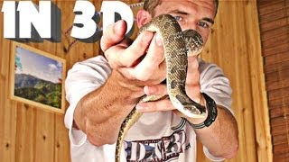 3D Video extreme 4 (scary snake!)