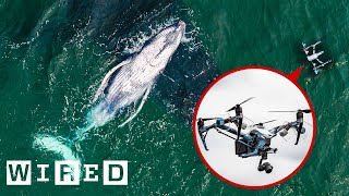 Scientists use drones to collect whale mucus for biological research purposes