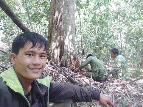 Tseem tseem hmoob lub neej yav ntuj qub qab HD Hmong