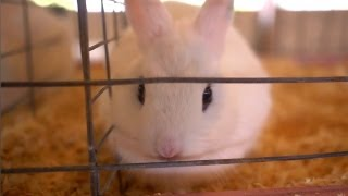 Tommys Dwarf Hotot Rabbit | Farm Raised With P. Allen Smith