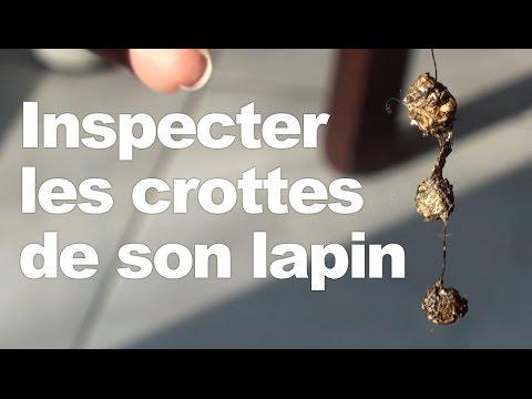 , title : 'Inspecter les crottes de son lapin