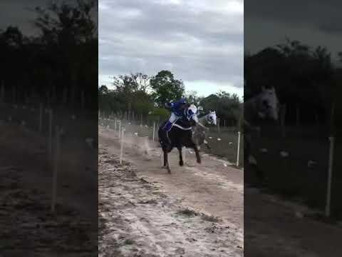 Corrida de cavalo em apora