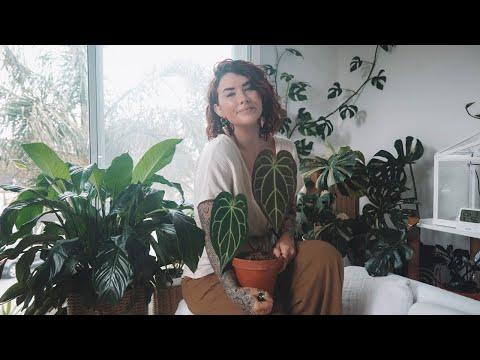 , title : 'indoor plant care tips *I wish I knew sooner* 🌿 house plant hacks