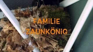 Familie Zaunkönig
