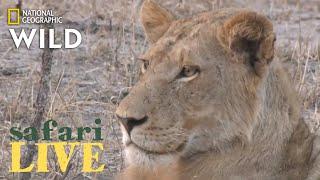 Safari Live - Day 209   Nat Geo Wild