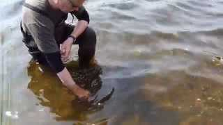 "Releasing a ""27lb-4oz"" FEROX TROUT (Ferox 85 Group)"