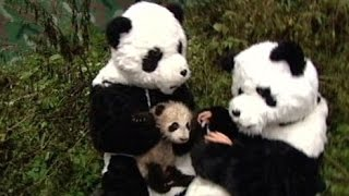 10 Perfect Panda Stories in Honor of Bao Bao | ABC News Remix