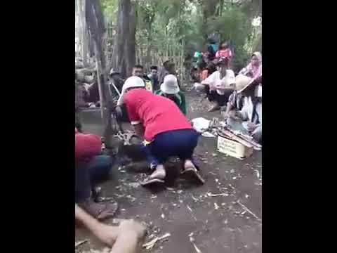 #Pejanggik Asaq yelem lengkok Toro,,acara mengangkat batu mas di lengkok toro
