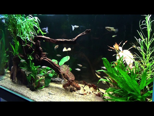 コリドラス水槽のその後/Corydoras Tank! After 4 Weeks (Restart of Aquarium Part 3)