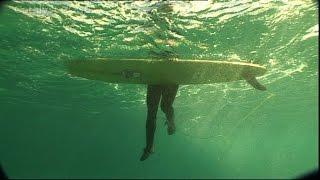 Shark attack avoidance tips