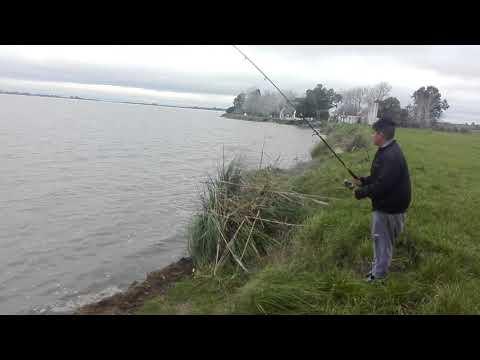 Primavera di oh risposte da pesca