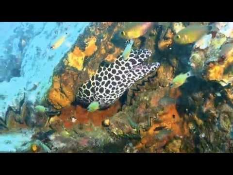 Tauchen am Wrack, Boonsung Wreck,Pakarang Cape,Thailand