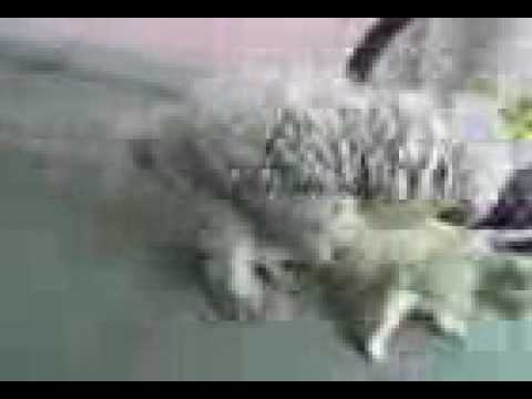 Russisch Sex Foto Video