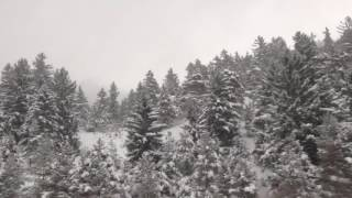 ABSTRACT ART VIDEO: SNOW-TREES