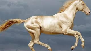 7 самых красивых лошадей в мире