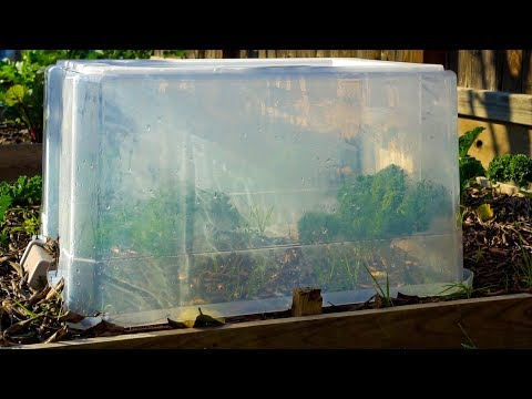 , title : 'Cover Plants with Plastic Tote and this Happens