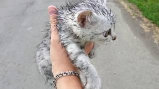 Бедненький котеночек замерз, мы решили ему помочь..забрали домой, смотрите в следующем видео