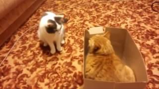 Коты дерутся видео   Прикольные видео про котов смотреть